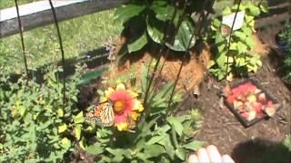 Turtle Back Zoo Trip June 2012 Part 4