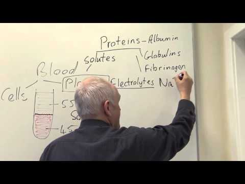 Plasma, Constituents And Functions