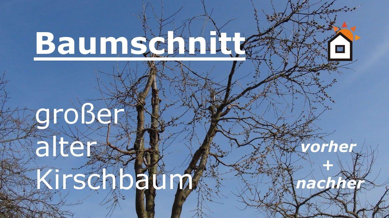 Geliebte Baumschnitt an großem altem Kirschbaum - vorher & nachher - YouTube &PM_91