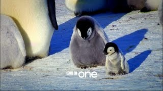 Snow Chick: A Penguin's Tale - Trailer - BBC One Christmas 2015