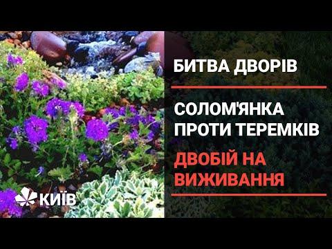 Солом'янка проти Теремків: двобій на виживання (частина 1)