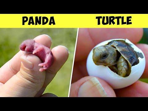 Top 10 Unbelievable Cute Newborn Animals Look Like