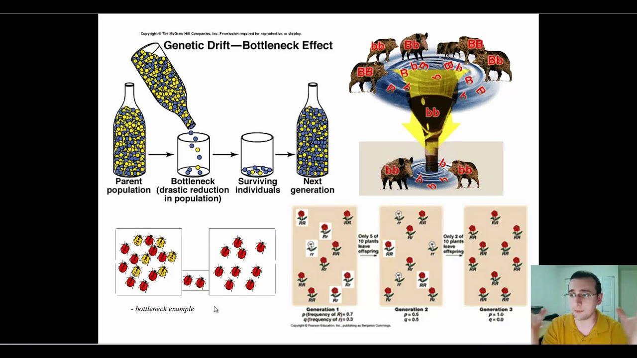 Microevolution Through Genetic Drift Youtube
