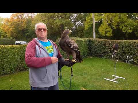 Eagle Manning