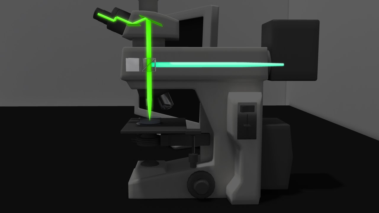 Fluorescence Microscopy Animation Youtube