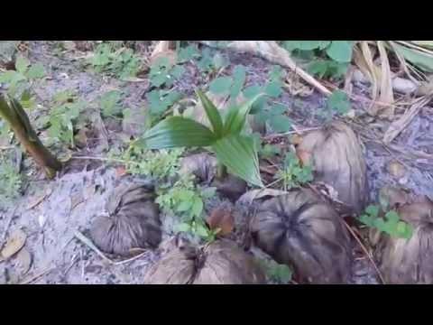 A Thai Garden Tour