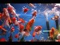 El pez goldfish no es un pez para principiantes