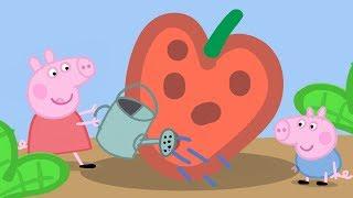 Peppa Pig en Español Episodios completos | Peppa Pig  Abuela y Abuelo | Dibujos Animados