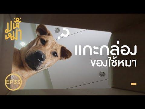 แกะกล่อง ของใช้หมาจากจีน !  มหึหมา EP33