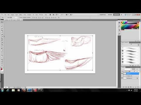 Art of Wings - Part I  The Anatomy of Bird Wings: Kyria Dori