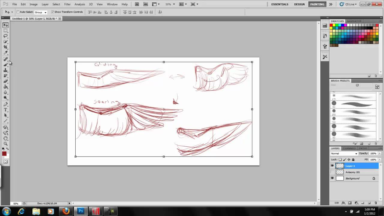 Art of Wings - Part I The Anatomy of Bird Wings: Kyria Dori - YouTube