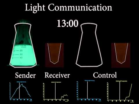 Peking iGEM 2012 Cell-Communication through Light.avi