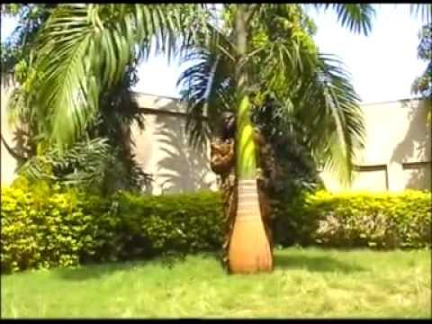 Benin - Dahoue doto - Ekpo le adan dji - gogohoun