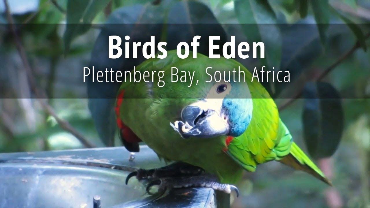 Birds Of Eden Garden Route South Africa Youtube