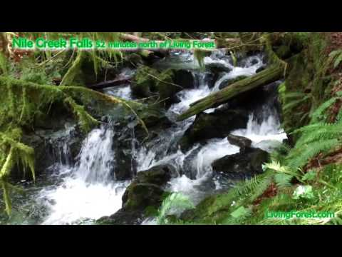 Nile Creek waterfalls- Vancouver Island daytrip 52 minutes from Living Forest