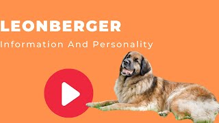 All Dogs Breeds - Leonberger Breed Information And Personality