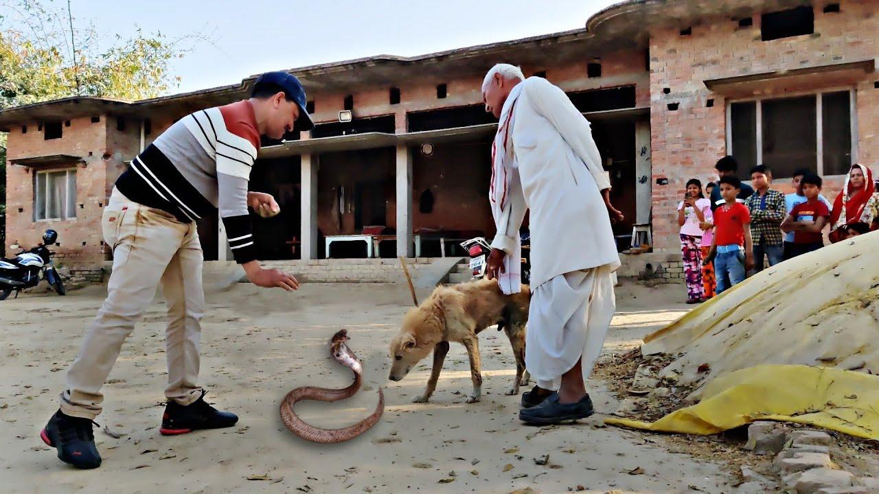 इस कुत्ते की वफादारी देखकर आपकी आंखें भर आएंगी, मालिक को बचाने के लिए नहीं कि अपनी जान की परवाह।