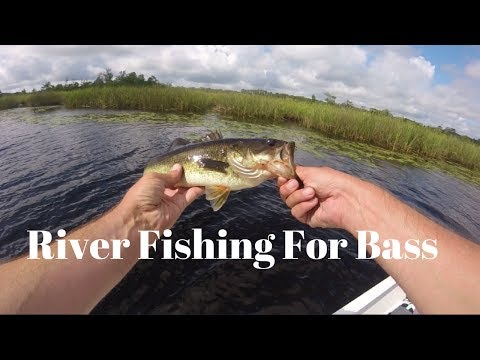 Bass Fishing Sopchoppy River Florida