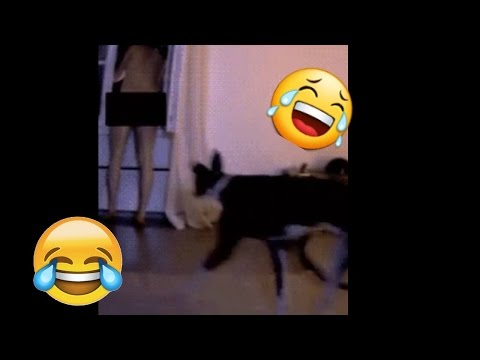 Funny/Cute Dog Compilation