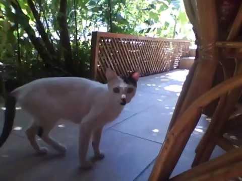 Hitler's cat...again