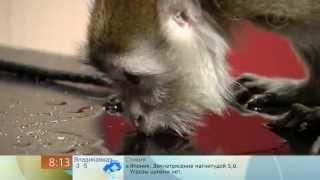 Доброе утро - Животные-алкоголики