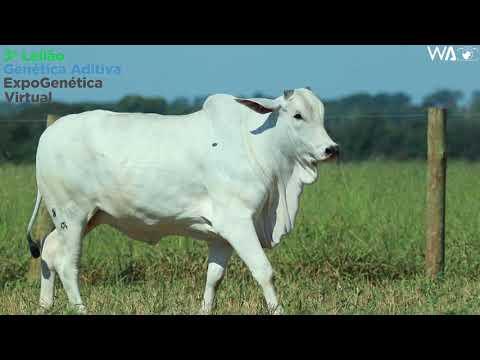 LOTE 20 - REMP 820 - 3º Leilão Genética Aditiva Expogenética 2020