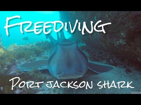 Searching for the Port Jackson Shark | Freediving at Gordon's Bay | OceanChan