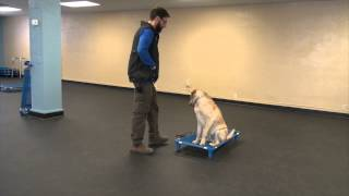 Bentley's First Session | K9 Connection Dog Training In Buffalo Ny