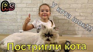 Грумминг кота Перчика в домашних условиях)))Кот в шоке!