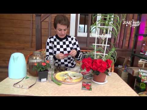 видео: Как разбудить старые  семена