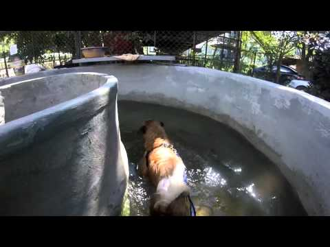 Elephant Nature Park Dog Rescue Volunteer