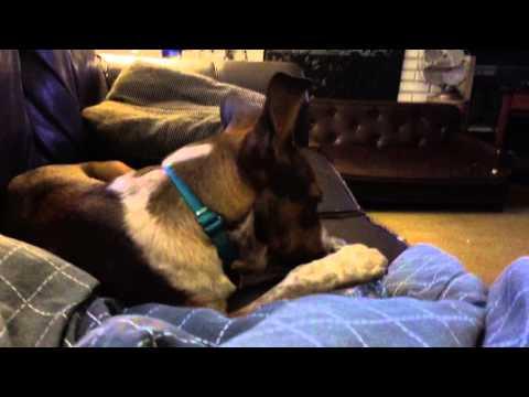 Pets LLC Lily