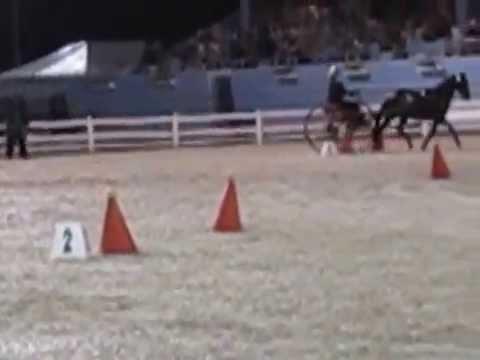 Devon Single Horse Scurry Cones