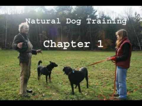 Chapter 1 - Natural Dog Training - audio-vid