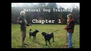 Chapter 1 - Natural Dog Training - Audio-vid