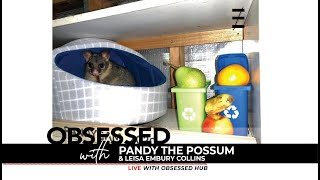 Obsessed with Pandy Possum & his human Leisa