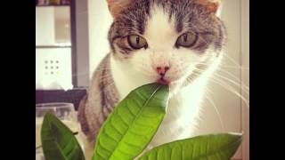 ❀ 80 Reasons Cats Are Snarkier Than Gawker
