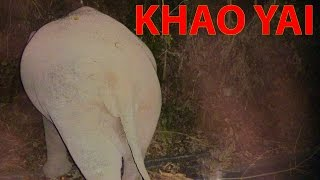 Wild elephant in jungle Khao Yai | Thailand trip 2014 | Day 4