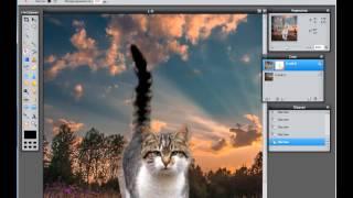 Вырезаем кота в Фотошоп-онлайн