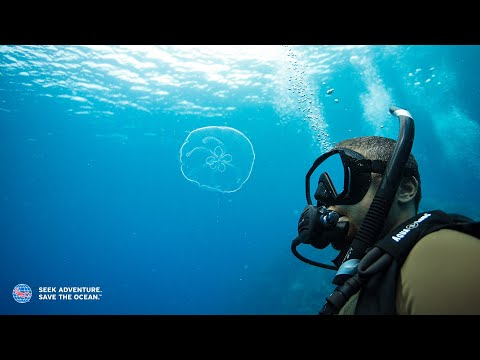 PADI | How to Get Scuba Certified