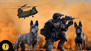 These are 10 Top Grade Police and Military Dog Breeds