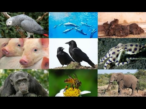 Top Most Intelligent Animals In The World YouTube - 25 intelligent animals world