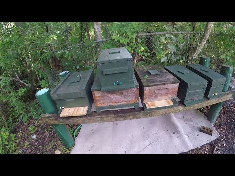 Beehive Stands & Tangle Foot