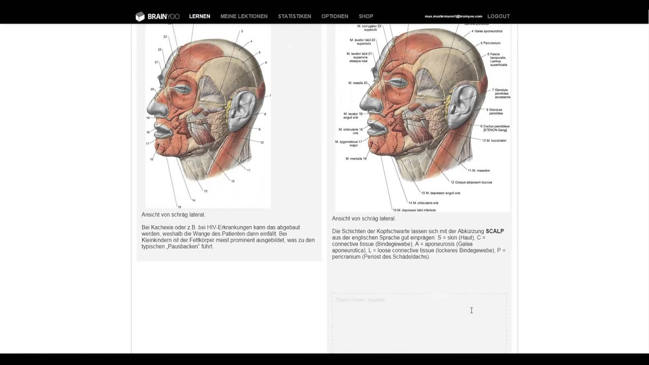 Sobotta Lernkarten-Muskeln - mit BRAINYOO für die Prüfung lernen ...