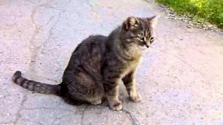 Кошка нюхает