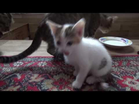 Раздаем котят! Объявление от 21/09/16