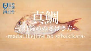 真鯛(まだい)のさばき方:活け締め - How to filet Red Sea Bream ver.Ikejime -|日本さばけるプロジェクト