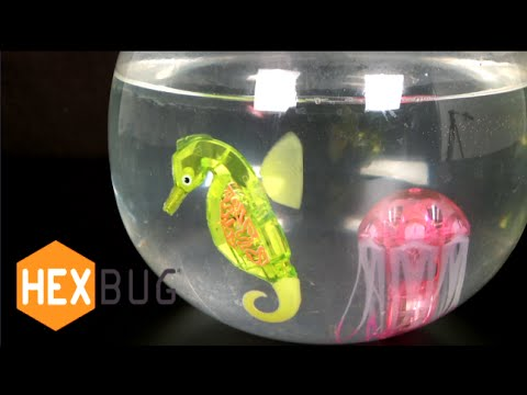 Videos for cats swimming toy fish frenzy funnycat tv for Swimming fish cat toy
