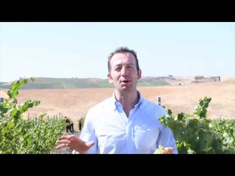 Vendemmia Grillo Spumante Saint Germain