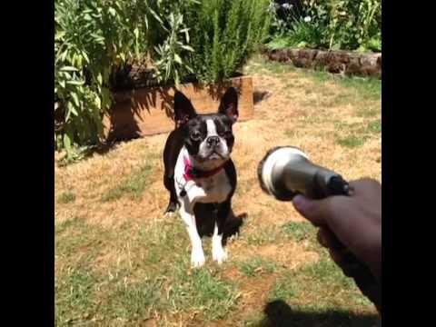 dog vs water hose